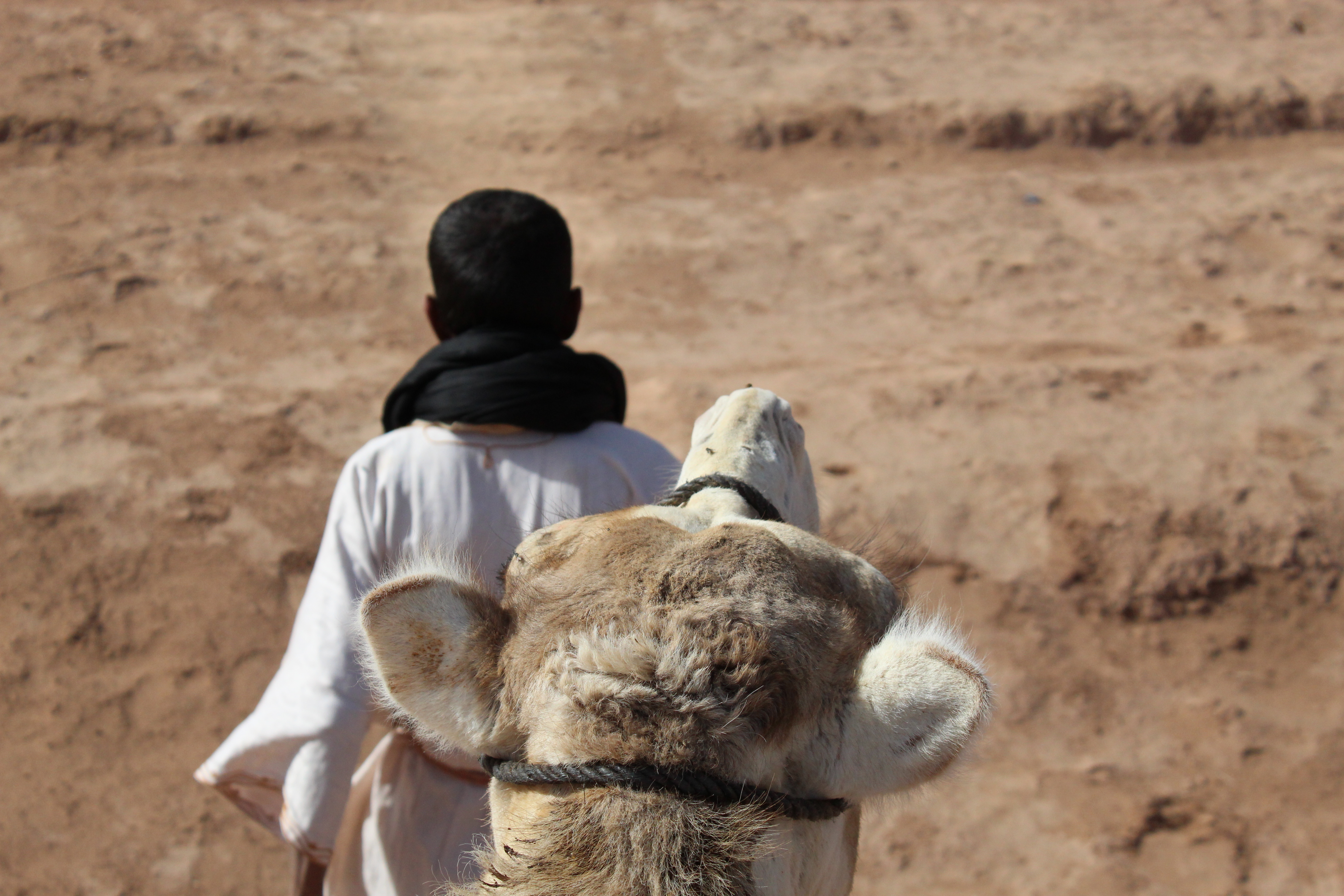 Abdul and a camel in Morocco